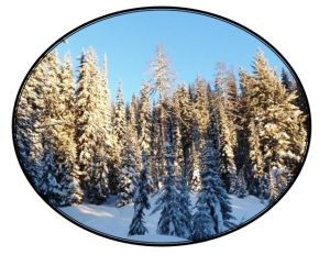 Silver Star Snowshoe Tours Winter Wonderland